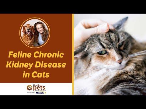 Feline Chronic Kidney Disease in Cats