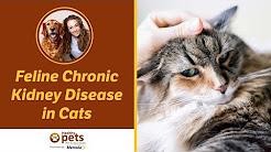 hqdefault - Kidney Disease Diabetes Cats