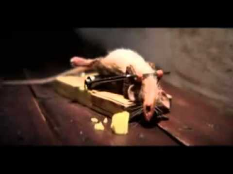 how to kill a mouse if traps don& 39