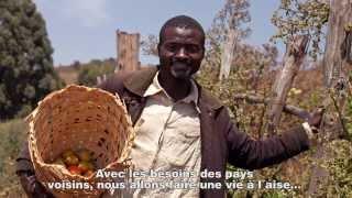 L'agriculture familiale, un métier d'avenir au Cameroun