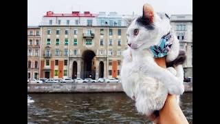 В каких кафе Петербурга обитают животные?