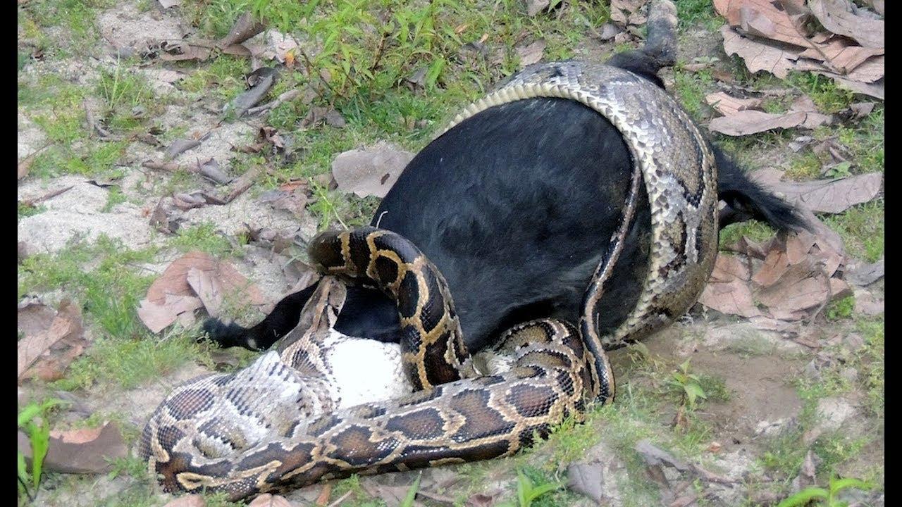 Wild Animal Caught in Camera I Indian Wild Animal Captured in Camera I  Indian Wild Life