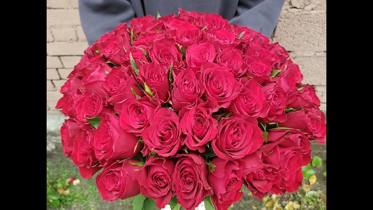 51 красная роза 40 см Кения