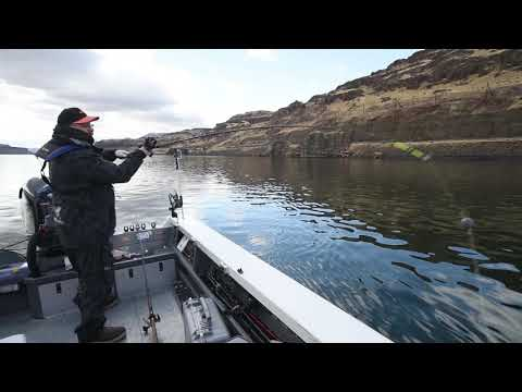 HOW TO FISH FOR GIANT STURGEON  - Sturgeon Fishing On The Columbia River With KastKing