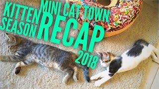 Mini Cat Town: Rescue Recap 2018