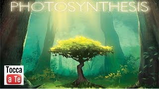 Tocca A Te 094 - Photosynthesis
