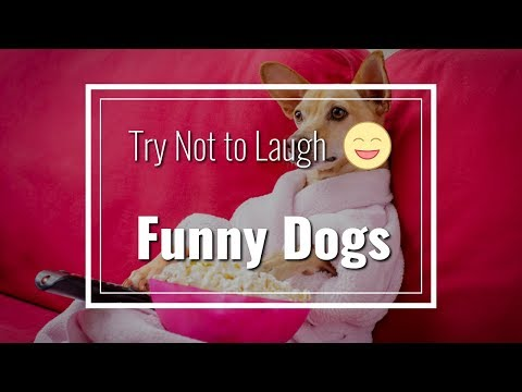 Funny Dogs Compilation - Try Not to Laugh