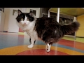 'Bionic cat' given new lease of life