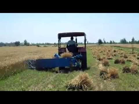 wheat cutting method