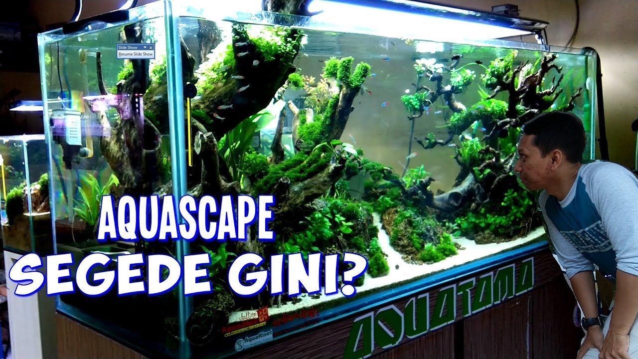 Grebek Toko Aquascape Cirebon Dev Aquascape Dan Aquatama Youtube