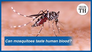 Can mosquitoes taste human blood?