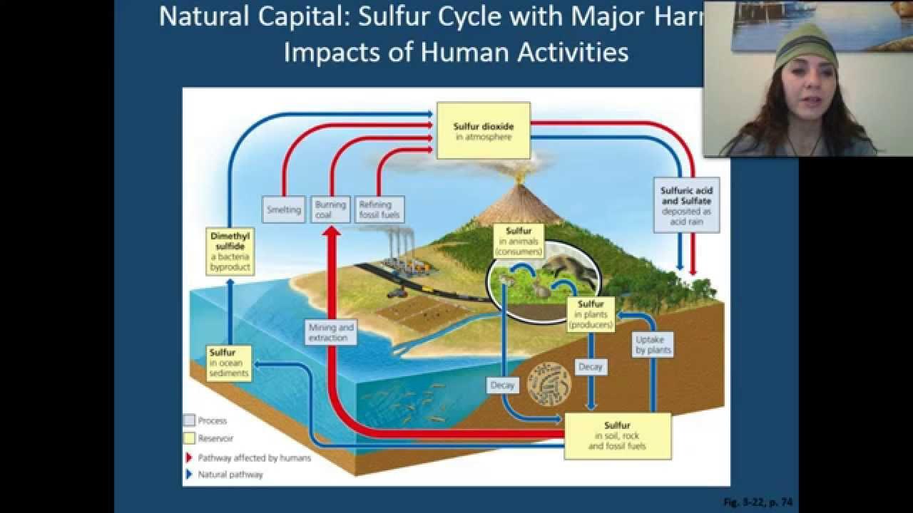 sulfur cycle diagram explanation [ 1280 x 720 Pixel ]