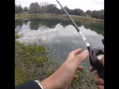 Fishing lake Lillian, Belleview Fl
