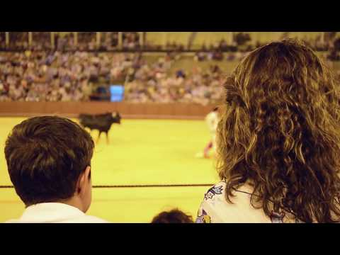 I watch Bullfighting // Sport or animal cruelty? GORE // Spain