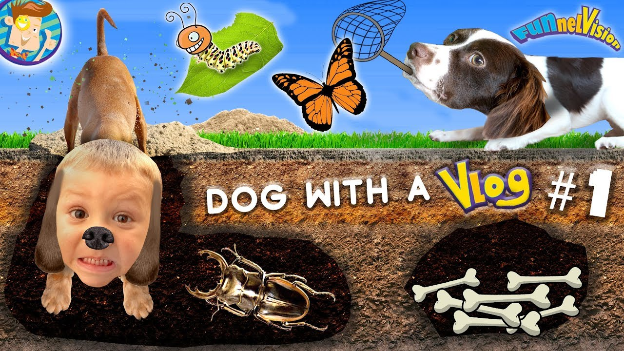 Download Dog with a VLOG #1! Rose & Chase the Dirt Diggers / Bug Catching Fun! FUNnel Family Doggy Vloggy