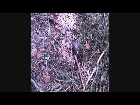 BIGFOOT RESEARCH 15 AUGUST 2013 WITH MARK LARSON PART 2