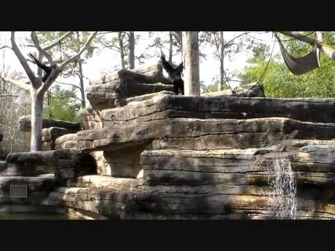 riverbanks zoo and garden in columbia sc youtube. Black Bedroom Furniture Sets. Home Design Ideas