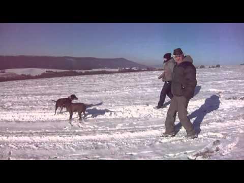 Pes a sníh aneb to je ale bžunda :)