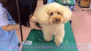 動物専門学校 トリマー 動物看護師 アクアリウム 動物のお仕事 グルーミング ペット美容学科 実習風景 thumbnail