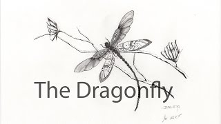 Dragonfly. Drawing_11