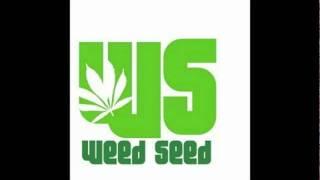 Alozade feat Kiprich - Cant Style Me (Antu Virus Riddim) Nov 2010 WeedSeed Pro