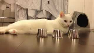 Clever Cat Wins Shell Game