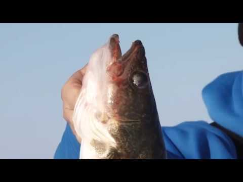 Fishing report Mille Lacs Lake Early January 2018