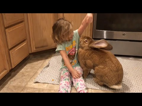 McCabe - This Girls Best Friend is a GIANT Rabbit
