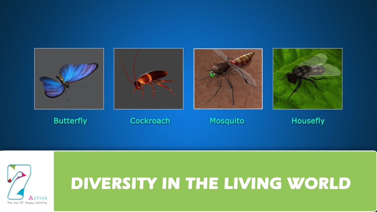 DIVERSITY IN THE LIVING WORLD