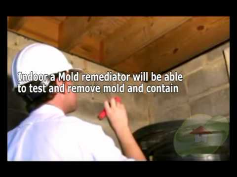 what-exactly-is-the-significant-difference-with-mildew-and-mold
