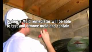 What exactly is the significant difference with mildew and mold