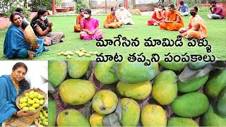 మామిడి పళ్ళు/ organic mangos/ Hyderabad Organic  gardener/ live village life with me in Hyderabad