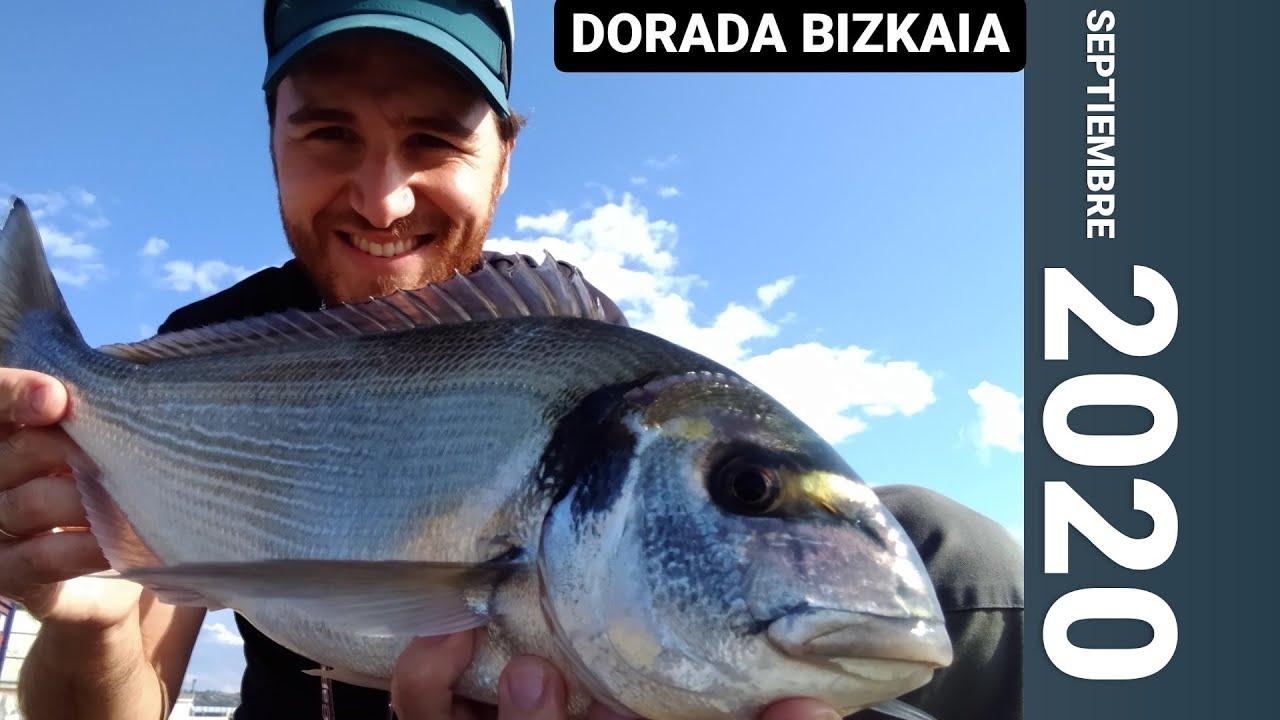 🎣PESCA SURFCASTING CANTÁBRICO 2020 #DORADA🐟 #SUELTA💪 Pesca urbana EUSKADI