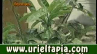 medicina natural cura de cancer de prostata uriel tapia