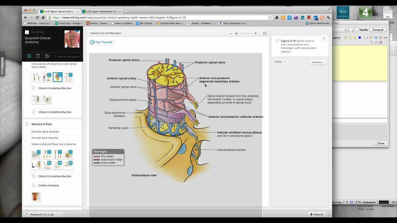 Studying Anatomy with Anki - YouTube