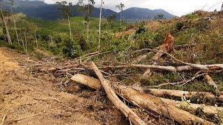 Lâm Đồng phát hiện vụ phá hơn 2 ha rừng ở Đạ K'Nàng