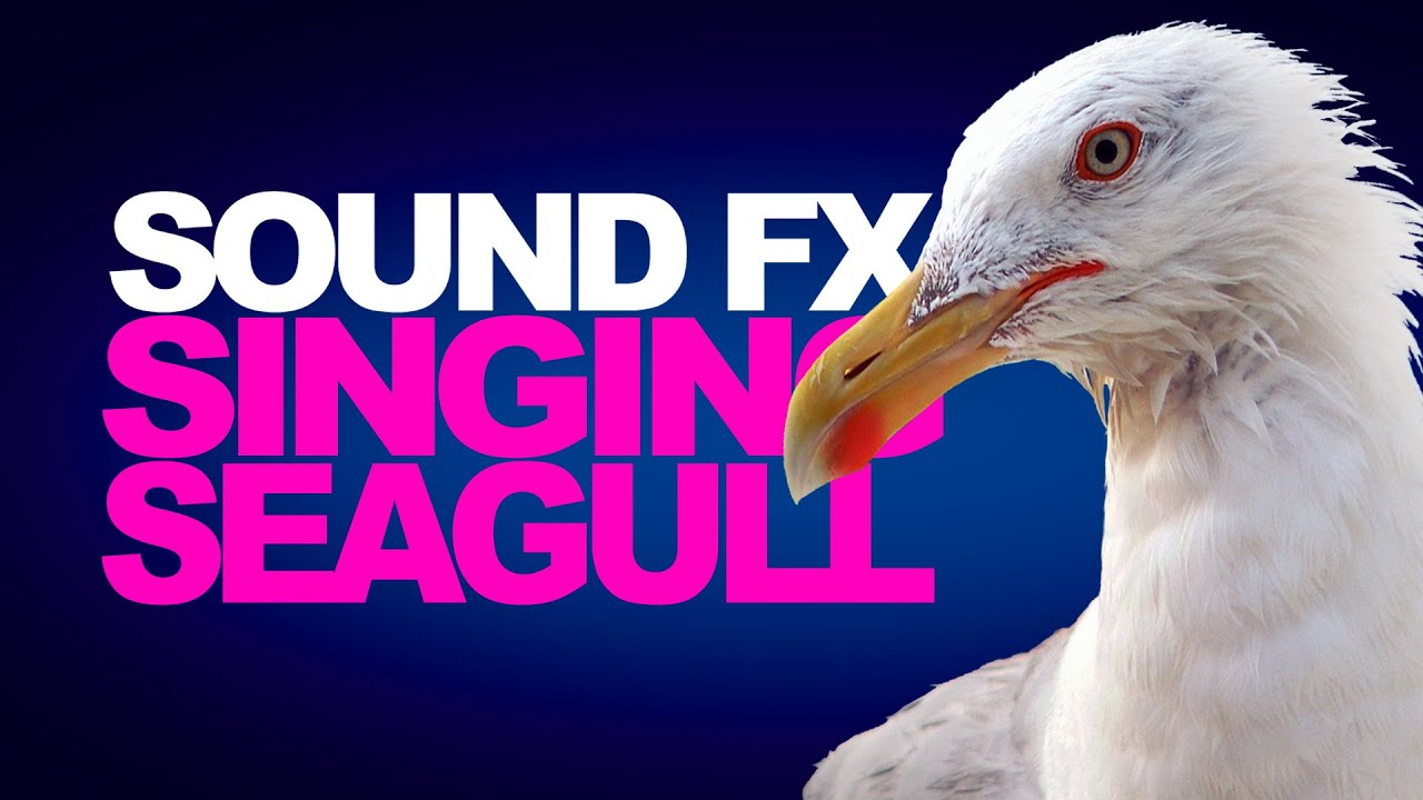 SINGING SEAGULLS | Sound Effects [High Quality]