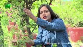 Artemisia Plant(Magical Medicinal Value Plant) In Aarogyam  On Green TV