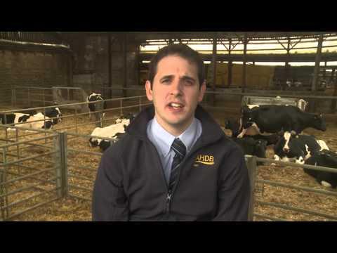 Reducing feed waste - AHDB Dairy