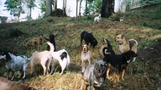 Paradise Dog Ranch Longview Kalama Woodland Vancouver Dog Boarding And Shuttle Service