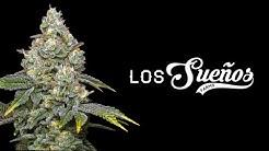 Largest Outdoor Cannabis Farm in World (Canna Cribs Episode 4: Los Sueos Farms)