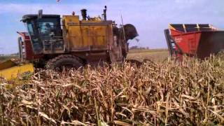 Gambar cover OXBO seed corn harvester with Mud Hog