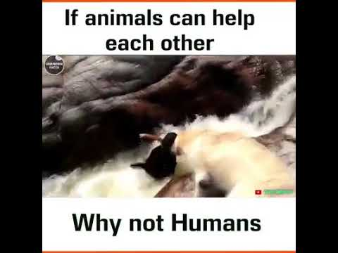 If animals can help each others ....so why not humans