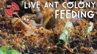 Live ANT COLONY Feeding! thumbnail