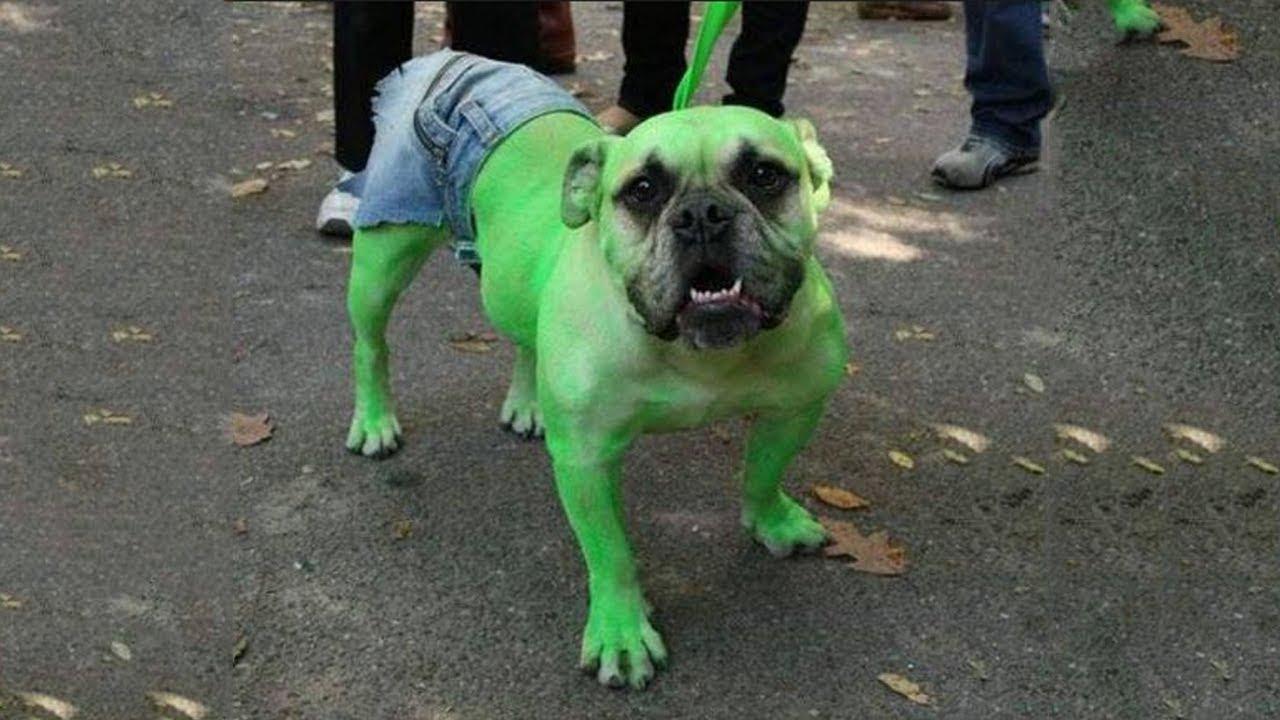 10 самых особенных собак в мире - YouTube