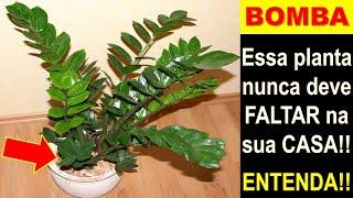 BOMBA - Não deixe essa PLANTA faltar na sua CASA!!! (Veja só isso)