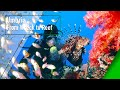 Umbria From Wreck to Reef - The Secrets of Nature