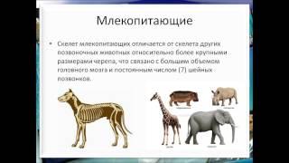 класс млекопитающие или звери презентация 7 класс