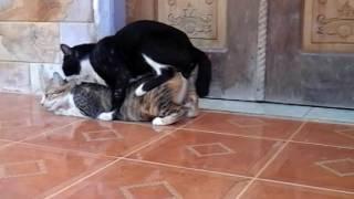 Aksi kocak kucing hot terbaru 😍