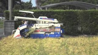 Rice Harvesting in Japan